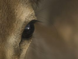 Doe Eyed by InayatShah
