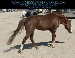 Liver Chestnut Stock by romino4000