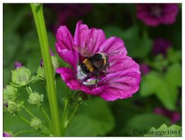 Bumble-Bee 4 by schnegge1984