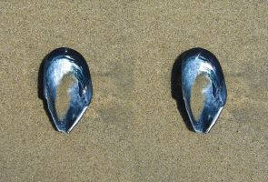 Stereograph - Shell by alanbecker
