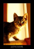 Little Oliver by -xades-