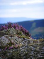 a slice of the long mynd by adamlack