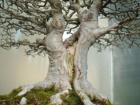 Bonsai 027 by aurochstock
