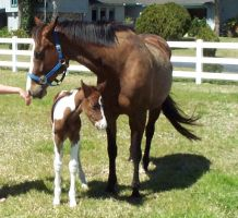 Mare and Foal 2 by ConvulsionStock