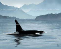 Nootka Sound - Limited Edition Print by Chaotica-I
