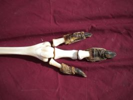 Skeletal Emu Leg by Minotaur-Queen