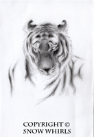 Sketches - Siberian Tiger by SnowWhirls
