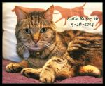 The Adventurous Manx is Sweet Sixteen by TeaPhotography