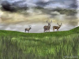 Highland Deer by TheFaceArtiste