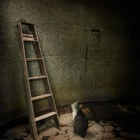 The next step by petits-reves