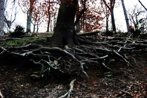 roots 2 by DeluxeArts