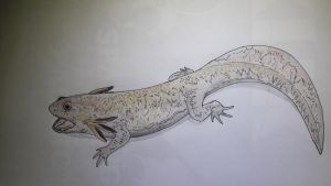 Chunerpeton tianyiensis by paleosir