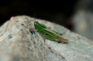 Bog Hopper by NorthernOracle