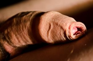 Resting penis 08 by artisticphotoman