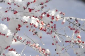 Frosty red by star37luminaire
