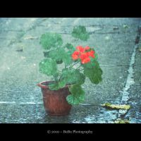 .:Rain Wash Me:. by bogdanici