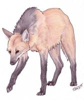 Maned Wolf by Korrok