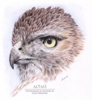 Red Tailed Hawk by LeviaDraconia