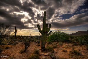 Cactus and the Clouds by Occamsrasr