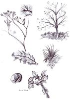 Plant-tree biro sketches by Gashu-Monsata