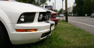 Mustang Face 4 zoomed by Aqua-Designs