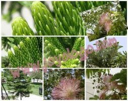 tree plant textures HQ images by joyologo