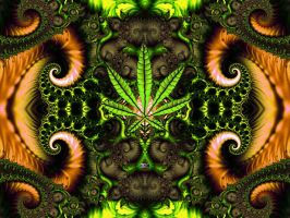 WeEd2k8 by xni