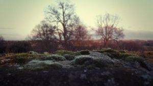 Moss by RichardGeorgeDavis