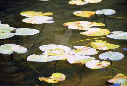 Lilly Pad Villiage by Noorieibrahim
