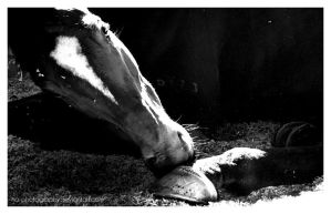 Cure for the Itch.    2 by no-photography