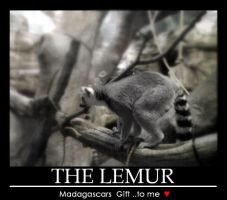 i love lemurs by WhoeMelk13