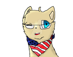 America cat by Torri11