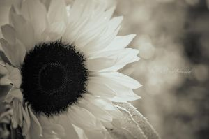 Summertime. by Phototubby