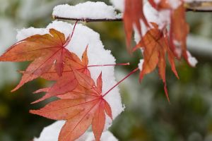 first snow by Fettoni