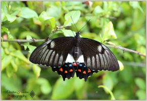 Butterfly 1 by bast4cats