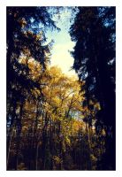 Enter The Golden Forest by KJH-Photography
