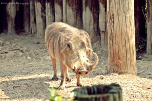 .Warthog. by mysticmoon13
