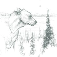 A Bear in the Woods by GravelsGargoyle