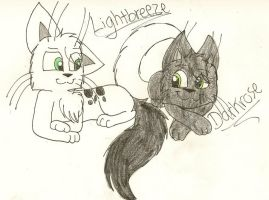 QP: Lightbreeze and Darkrose by dragonpop1