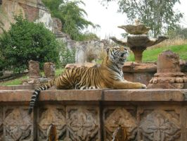 Tiger 3 by D-is-for-Duck