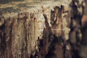 Rotten Wood II by Seeb-san