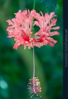 Exotic Flower by kuschelirmel-stock