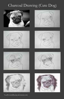 Charcoal Drawing Tutorial (Cute Dog) by YourFavoriteRussian