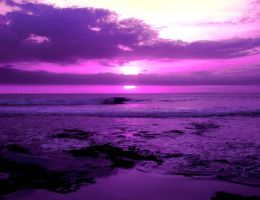 In Purple by Andry122
