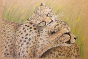 Cheetah drawing by Mvraymer12