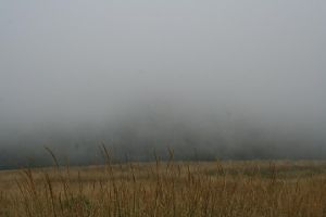 landscape 44: fog and grass by cyborgsuzystock