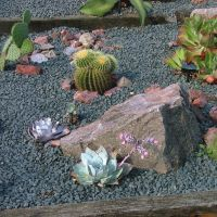 Xerophyte Rock Garden, The PoW Conservatory At Kew by aegiandyad