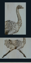 Ostrich Woodburning - Details by MontanaJohnsons