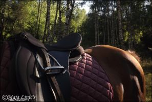 No hour of life wasted that spent in the saddle. by PerfectFriend