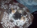 Four kittens by Zippoprower-14